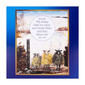 Christmas Card - Sheep (front)